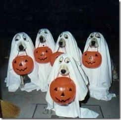 lustiges halloween bild